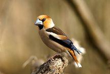 Păsări în România