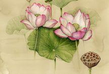 botanische prenten