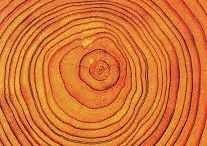 Annual rings / A new layer of wood is added in each growing season, thickening the stem, existing branches and roots, to form a growth ring. Growth rings, also referred to as tree rings or annual rings, can be seen in a horizontal cross section cut through the trunk of a tree.