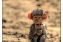 Just plain Cute! / by Denise Clark