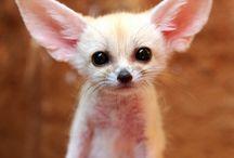 Cute! / by Megan Polatty