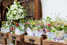 Flores e plantas / by Gabriela Oliveira