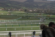 Cheltenham Festival / The Greatest Show On Turf. The 2014 Cheltenham Festival runs from 11th to 14th March.  / by William Hill Bookmakers