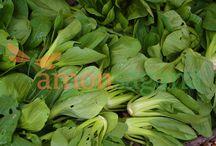 Enjoy the abundance of fresh bok choy at Amonsagana.