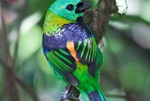 Birds / olika typer av fåglar