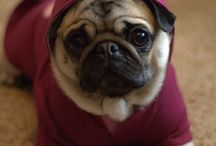 PUG OBSESSION / by BARB