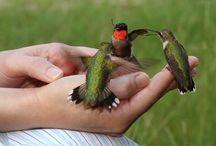 Birds of the World take flight / by Kim Hazlett