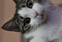 Too cute !