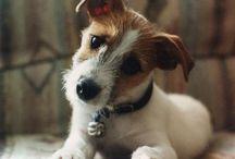 My Other Doggie Love