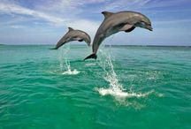Dolphin Sanctuaries in India / Sanctuariesindia: Here you can get information about all Dolphin Sanctuaries in India.