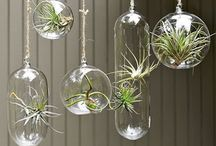 Garden Air Plants / any that will have a place in all types of environment