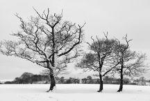 Folksy Simply Winter