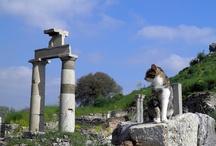 Cats among ruins