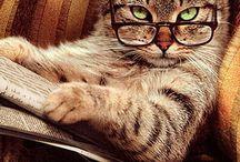 kedi kitap okuyor
