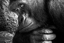 【生物】猿類