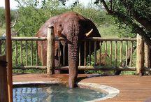 Elephants !