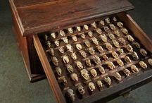 skulls, fossils, and macabre