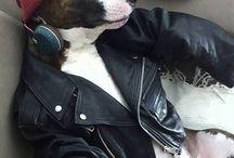 Snoop-Doggy-Lichius_•√™