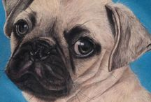 Pug portraits / A selection of lifelike, high end pet portraits from the Tilly & Blue range