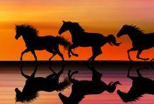 caballos / by Liz Valdez