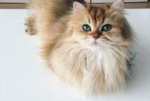 Smoothie / Nous vous présentons Smoothie, le chat le plus photogénique d'internet