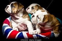 Alamy 100% royalties student Images  / by Alamy