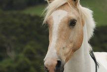 Alycia Burton: Free Rider