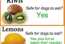 Good and bad dog food
