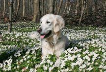 Pups/Doggie.