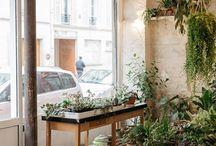 Mama Petula chez Welcome Bio Bazar Paris 11 / Mama Petula - concept store végétal - plants shop - Paris