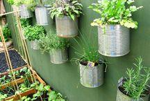 gardening / by veronika morelock