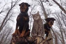 Cats and Dogs / Dogs and Cats