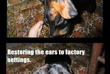ALL THINGS PETS