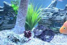 Maintaining Fish Tank