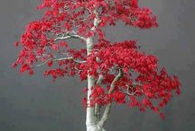 bonsai / the gentle art of trees / by Gae Webster
