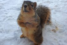 SQUIRREL!!! / For our never ending love of all things squirly.