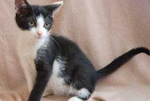 Pretty kitty cats, meow!