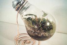 Diy terarium, paludarium, aquarium, vivarium / About my natural product