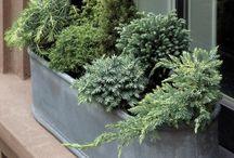 Projekty na vyskúšanie záhrada