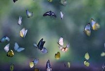 Butterfly&Birds