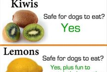 tips for dogs
