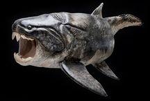 06.fish