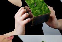 Bijoux plante