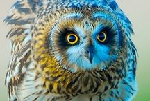 Owl Wisdom / Owls are amazing spirits who are intricate part of our ecosystems. I love hearing screeching owls in the night. I also love that they love to hunt and eat vermin. Let's hear it for owls!! / by Animal Muse: Cathy Currea