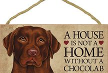 Chocolate Labs / by Erin Durrant