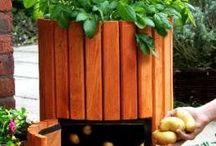 Obst- & Gemüsegarten