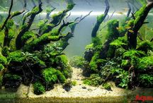 Galery Aquascape