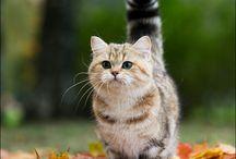 crazy cat lady / by Rachel Brophy