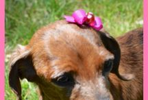 pet accessories / Clothes, bows, costumes, booties, and more! Adorable ways to accessorize any type of pet
