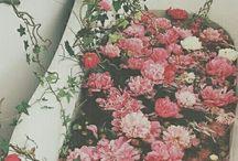 aesth; pink / pink aesthetics